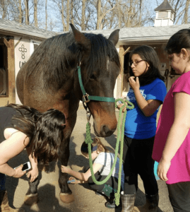 Jackie Tobacco, Lucky Star Farm, The Healing Power of Horses for Autistic Children